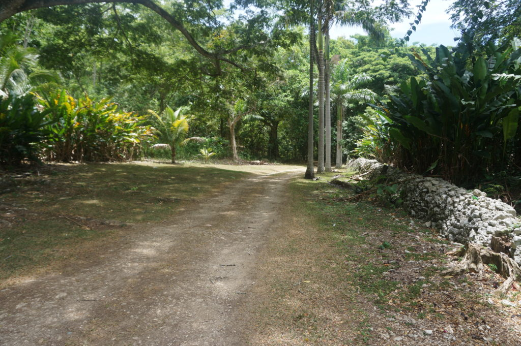 The grounds at Hidden Beauty, Jamaica
